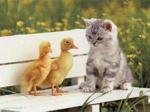 un gatto e due papere